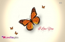 I Love You Butterfly